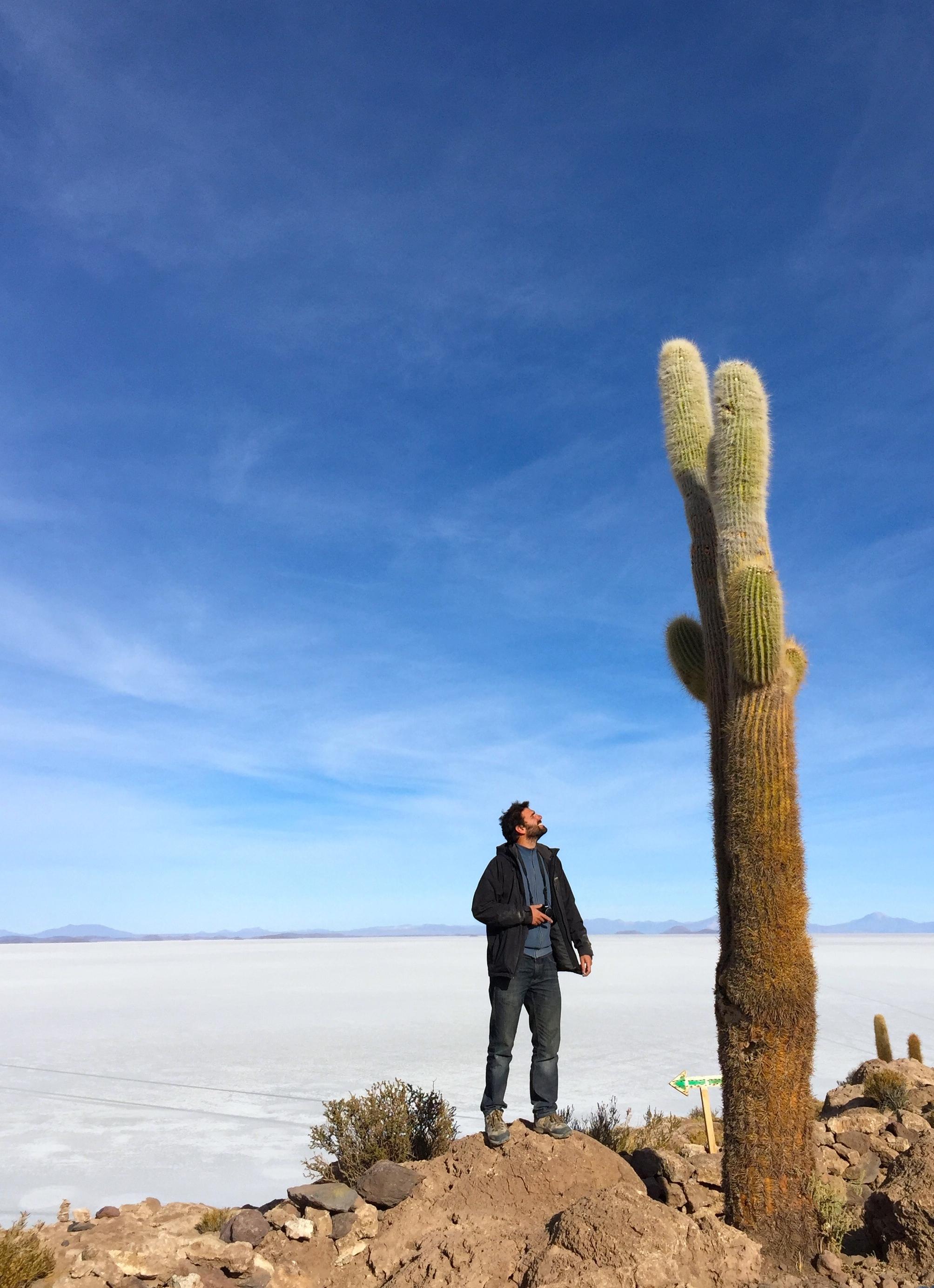 cactus incahuasi.jpg